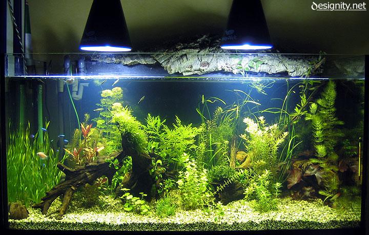 Acquariofilia foto di un acquario d 39 acqua dolce for Acqua acquario