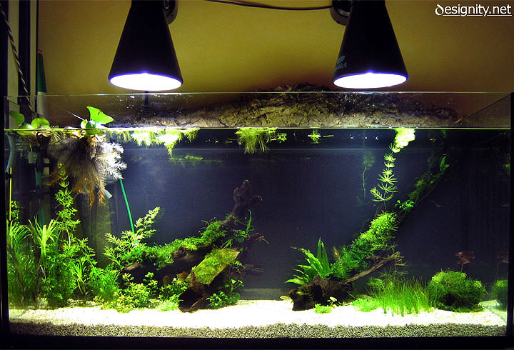 Freshwater aquarium photo 12-05