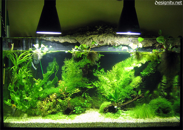 Freshwater aquarium photo 01-06