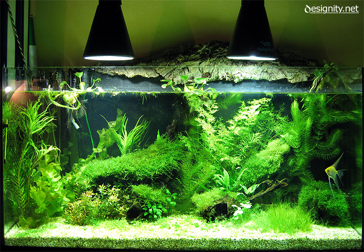 Freshwater aquarium photo 03-06