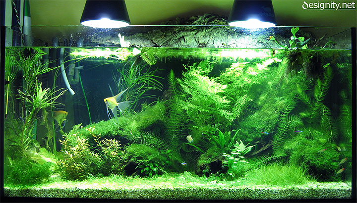 Freshwater aquarium photo 04-06